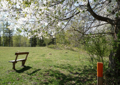 Vandra i Valle Körsbärsträd vandringsled